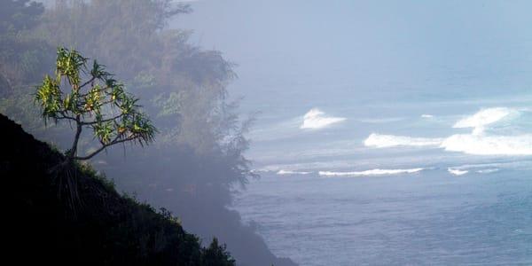 morning sun, Kauai, Hawaii