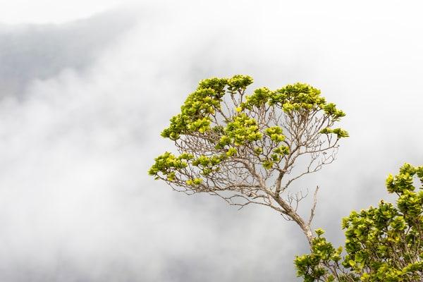 tree, cloud, Hawaii, Waimea Canyon
