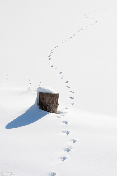 deer-tracks, snow scenes, deer