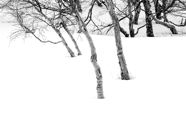 Snowscapes And Polar Regions 109 Photography Art | Cheng Yan Studio