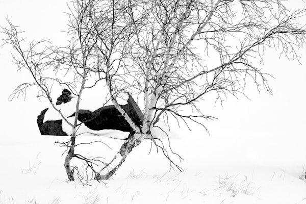 Snowscapes And Polar Regions 107 Photography Art | Cheng Yan Studio