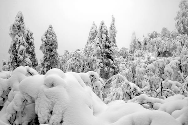 Snowscapes And Polar Regions 110 Photography Art | Cheng Yan Studio