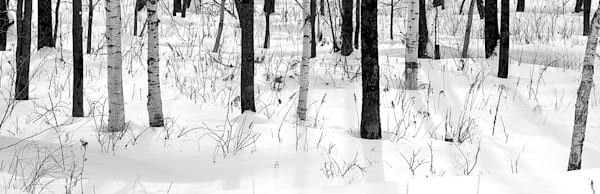 snowscapes-and-polar-regions-111