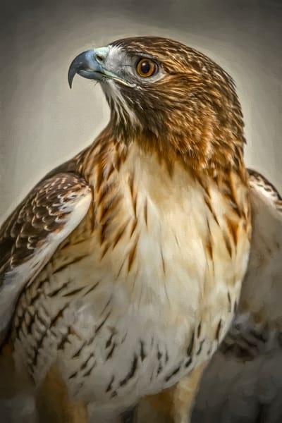Red Shouldered Hawk Bird Of Prey Decor|Wall Decor fleblanc