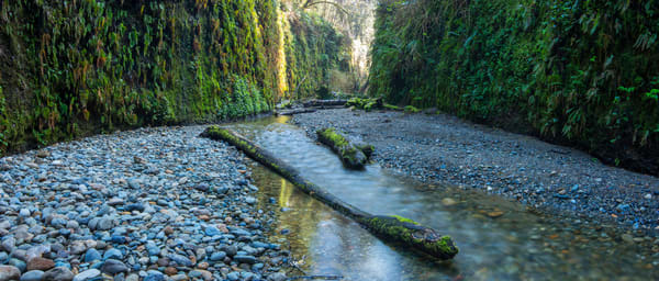Fern Canyon Fine Art Photography Print by Brad Scott