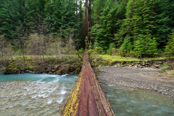 Tree Bridge, Humbolt Redwoods Fine Art Print by Brad Scott