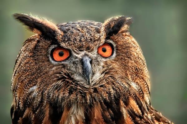 Great Horned Owl Bird Of Prey Decor|Wall Decor fleblanc