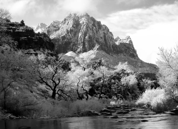 Black White Landscape Flower Mountain