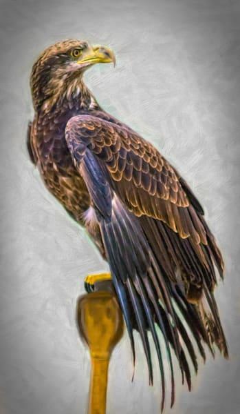 Golden Eagle Bird Of Prey Predator  Decor|Wall Decor fleblanc