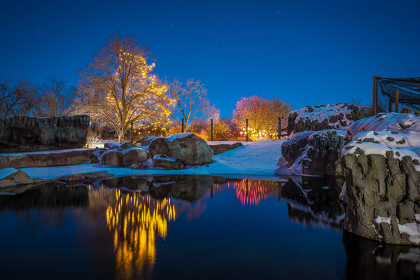 Photograph of Zoo Lights Reflecting in Water at Denver Zoo