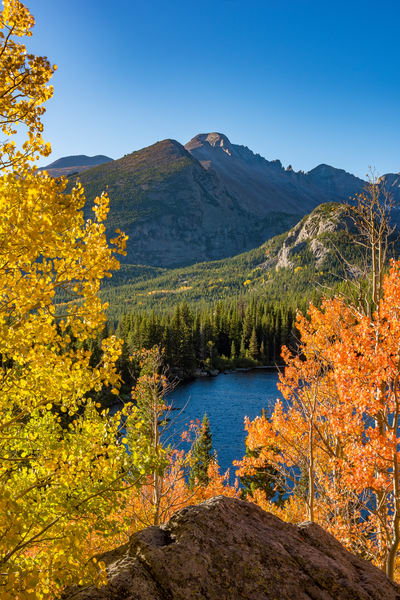Vertical Picture of Bear Lake Framed by Aspen Trees Rocky Mountain National Park