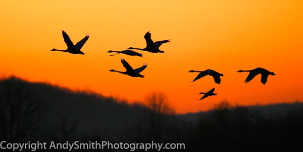 fine art photograph of silhouettes in the sunrise