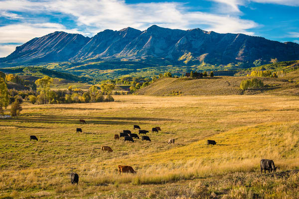 Photograph of Colorado Cattle Ranch in Crested Butte CO