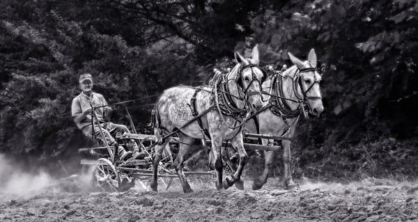 Two Mule Team Antique Farm Ranch Plow Black & White fleblanc