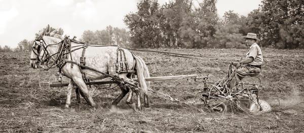 Mule Team Vintage Plowing Farm Sepia|Wall Decor fleblanc
