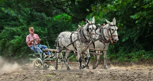 Mule Team Antique Farm Ranch Plow|Wall Decor fleblanc