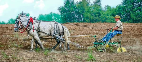 Mule Team Harness Vintage Plowing Farm|Wall Decor fleblanc