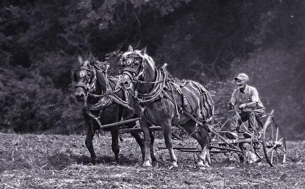Two Horse Team Antique Farm Ranch Plow Black & White fleblanc