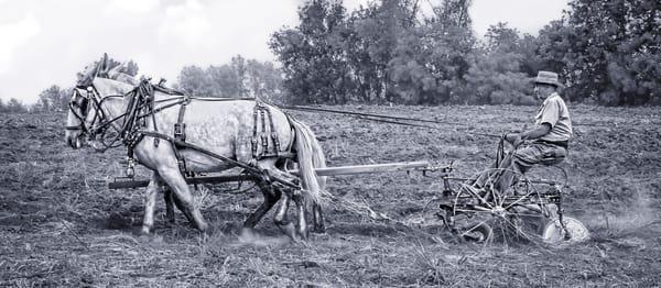 Mule Team Vintage Plowing Farm Plow Black & White fleblanc