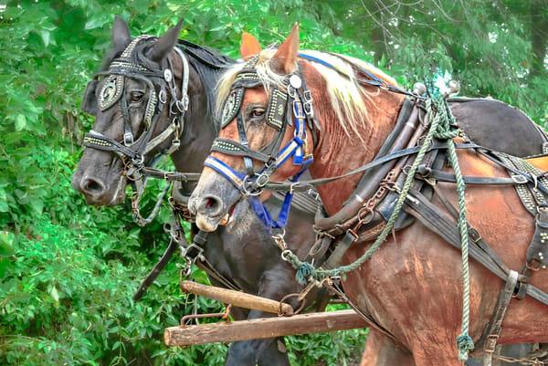Farm Horses Vintage Harness Ranch Plow|Wall Decor fleblanc