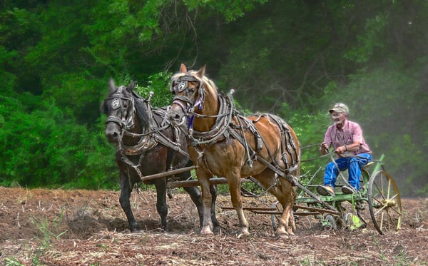 Horse Team Vintage Farm Ranch Plow|Wall Decor fleblanc