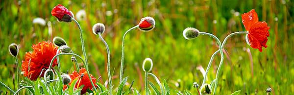 Flowers And Plants 002 Photography Art | Cheng Yan Studio