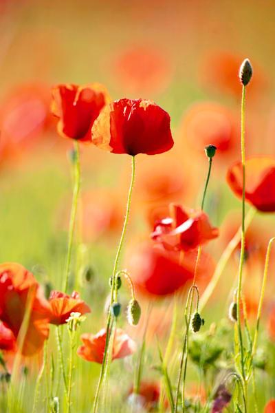 Flowers And Plants 013 Photography Art | Cheng Yan Studio