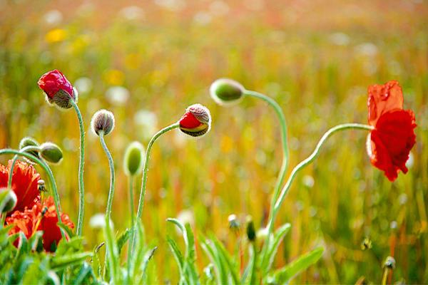 Flowers And Plants 009 Photography Art | Cheng Yan Studio
