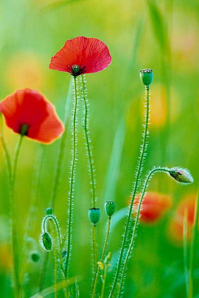 Flowers And Plants 011 Photography Art | Cheng Yan Studio