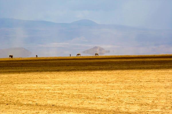 Plains And Grasslands 003 Photography Art | Cheng Yan Studio