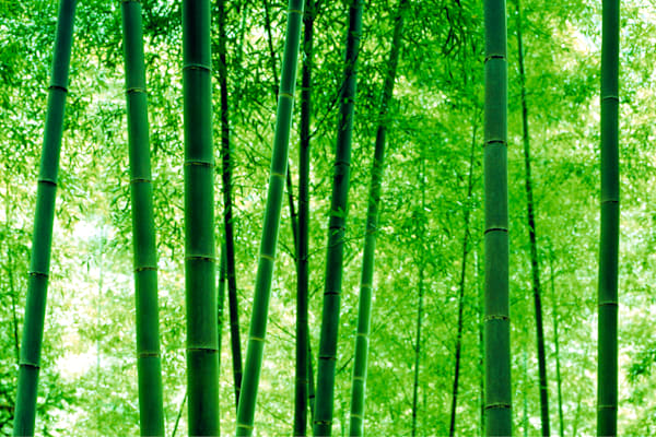 Trees And Forests 007 Photography Art | Cheng Yan Studio