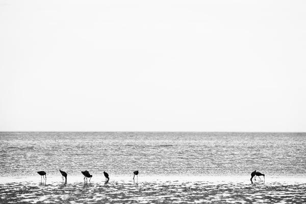 hungry birds beach art print