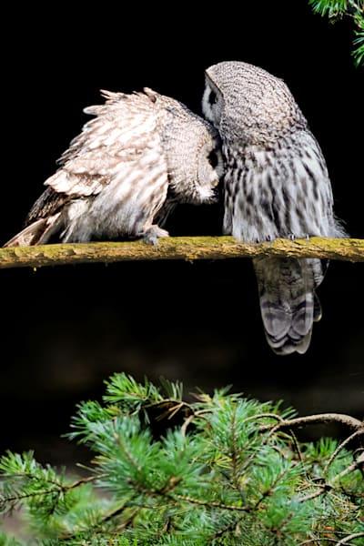 owls-006