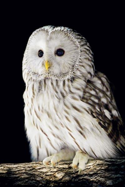 owls-002