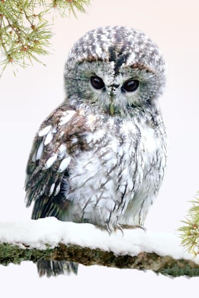 owls-001