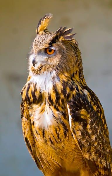 Owls 004 Photography Art | Cheng Yan Studio