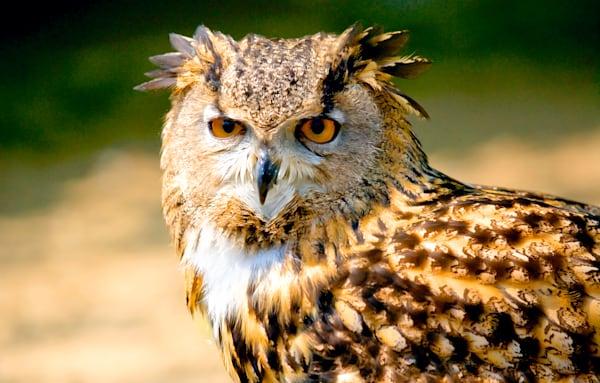 Owls 005 Photography Art | Cheng Yan Studio