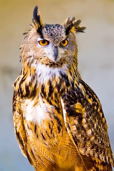 owls-003