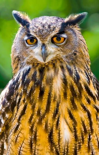 Owls 007 Photography Art | Cheng Yan Studio