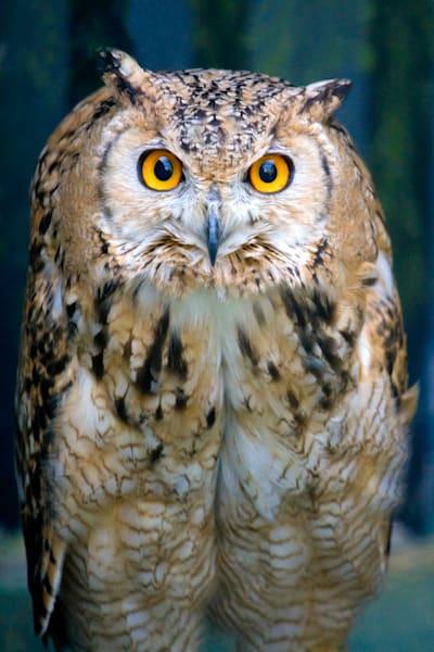 Owls 009 Photography Art | Cheng Yan Studio