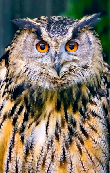 Owls 008 Photography Art | Cheng Yan Studio