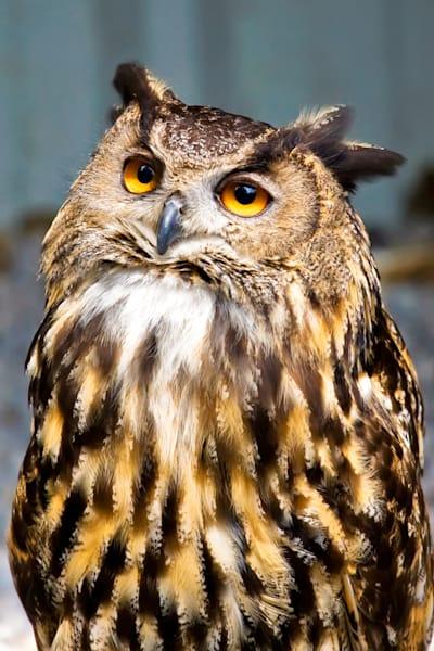 owls-010