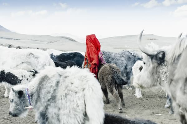 Kyrgyz Beauty and her beasts - Photography by Varial