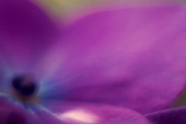 floral-46