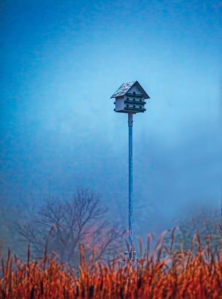 the-birdhouse-open