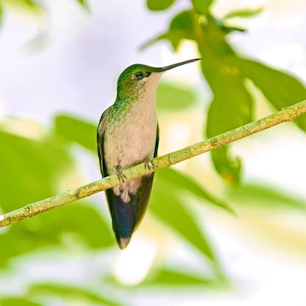 south-american-birds-011