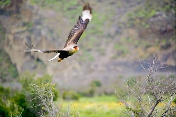 south-american-birds-014