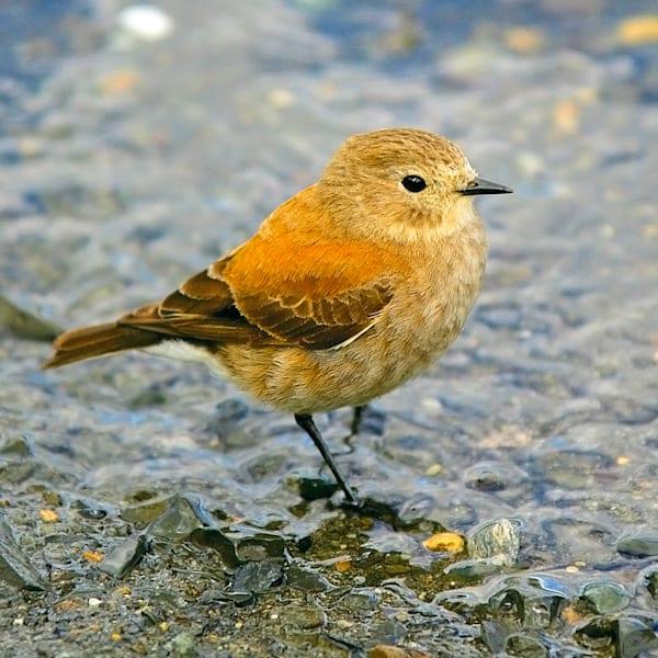 south-american-birds-020