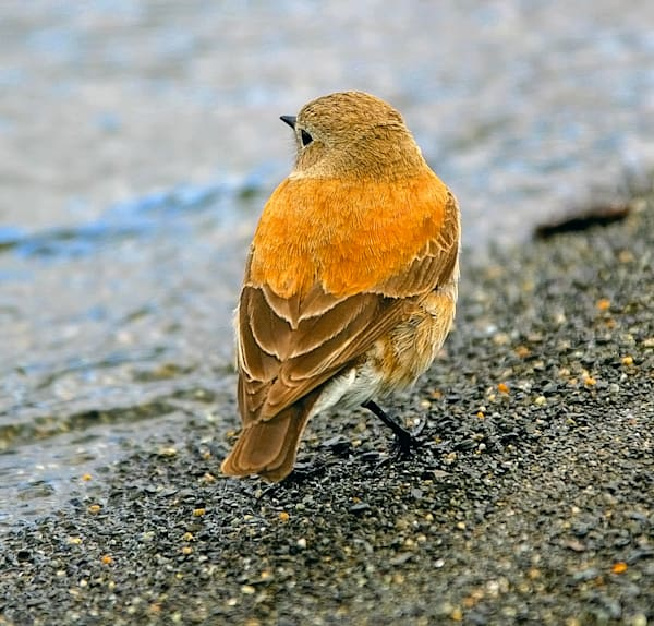 south-american-birds-022