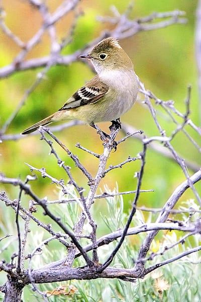 south-american-birds-034